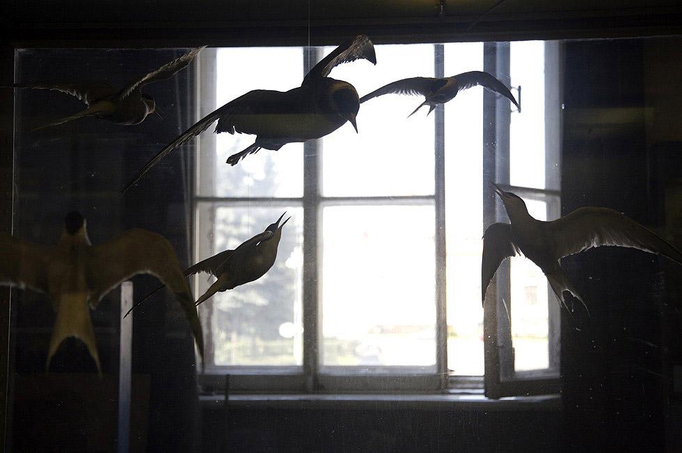 Georg Meyer-Wiel, Photography, Still Life, Image 6